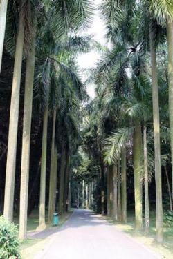 华南植物园木兰园景点介绍
