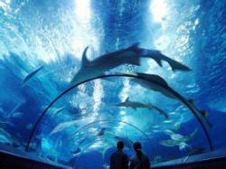 上海海洋水族馆景点介绍