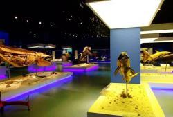 金石滩地质博物馆景点介绍