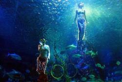 长沙海底世界景点介绍