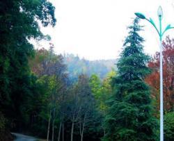 桂花森林公园