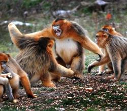 秦岭野生动物园景点介绍
