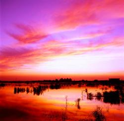 龙凤湿地景点介绍