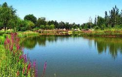 银川森淼生态旅游区