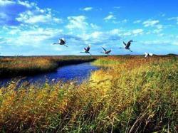 哈拉海湿地