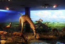 大连自然博物馆景点介绍