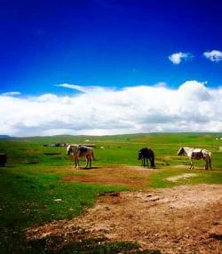 金银滩草原